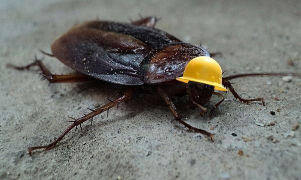 cockroach-3645305_1280